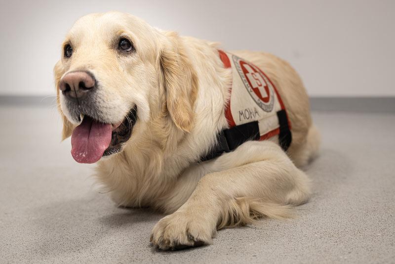 Samariterbund Hundestaffel Favoriten auf der Showbühne Lebenslust